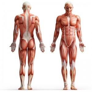 Fysioterapi og fysioterapeutisk vejledning